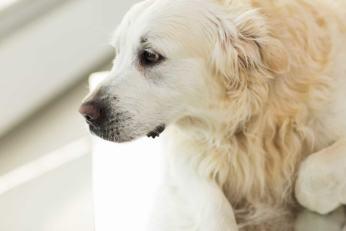 Chora wątroba u psa i kota: zaburzenia ogólnoustrojowe