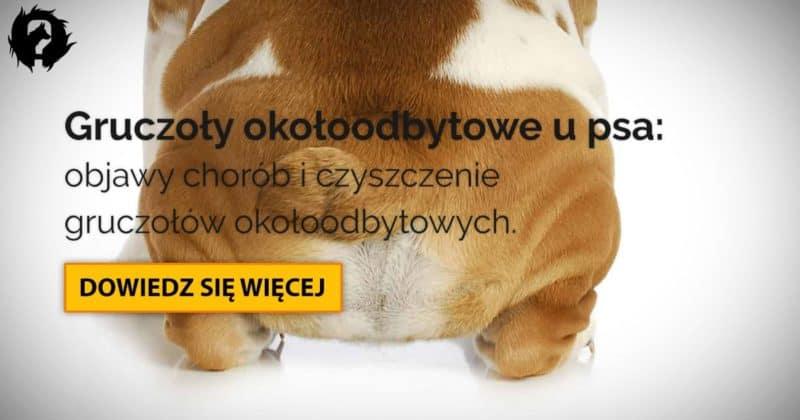 Gruczoły okołoodbytowe u psa: zapalenie i czyszczenie zatok okołoodbytowych