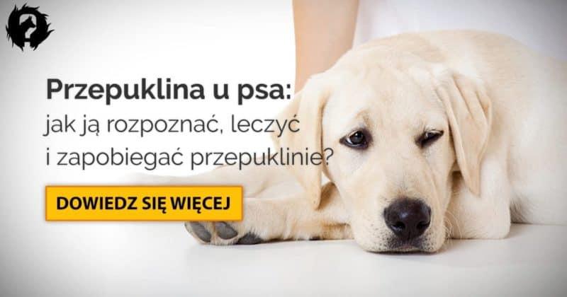 Przepuklina u psa: przyczyny, objawy i operacja przepukliny u psa