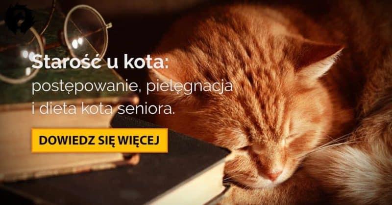 Kot senior: z czym wiąże się starość u kota [zalecenia zdrowotne, dieta]