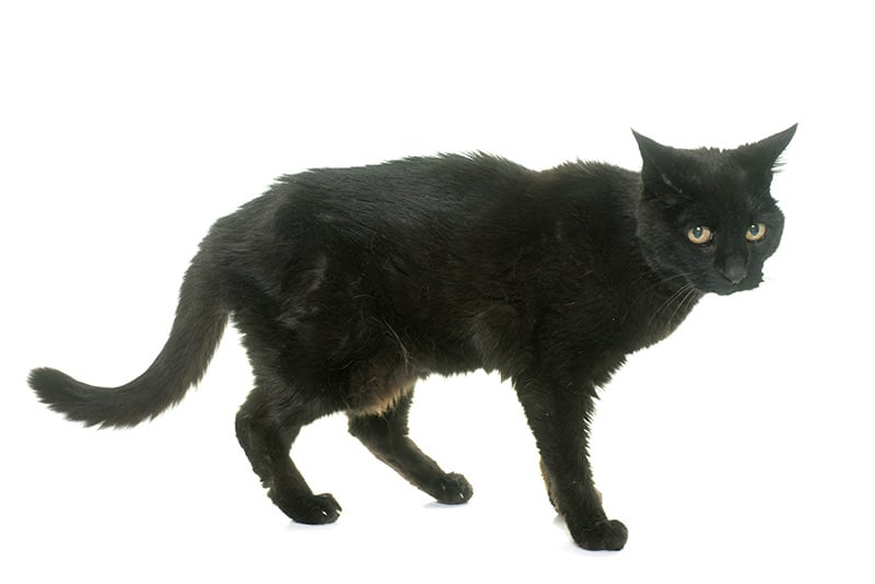 Zmiany obserwowane u starszych kotów