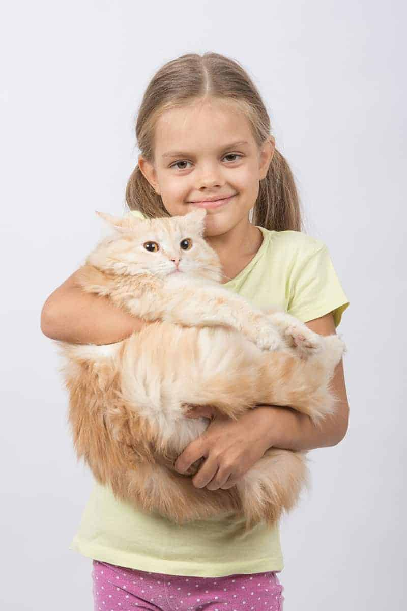 Ile żyje kot domowy?