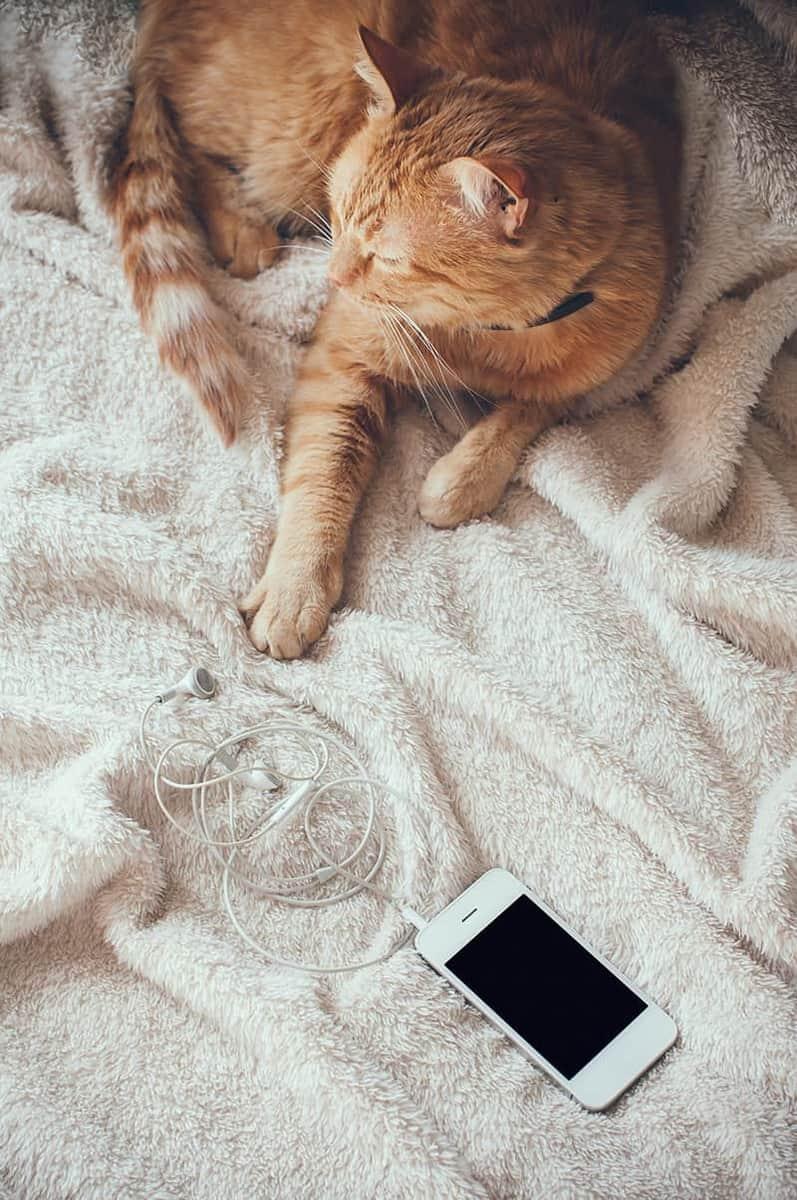 Kot domowy choroby