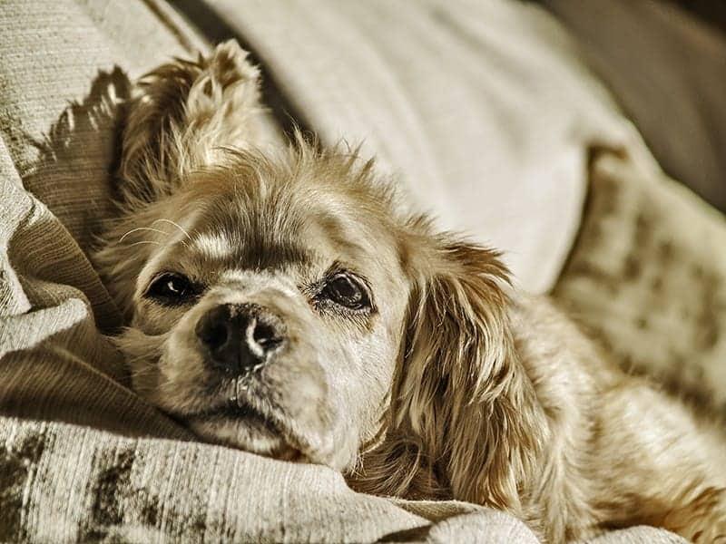 Jak poznać, że Twój pies się nudzi?
