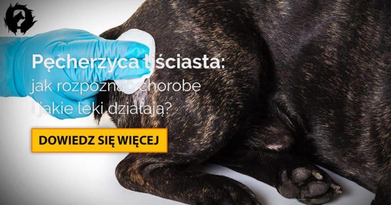 Pęcherzyca liściasta u psa: objawy, diagnostyka i leczenie pęcherzycy