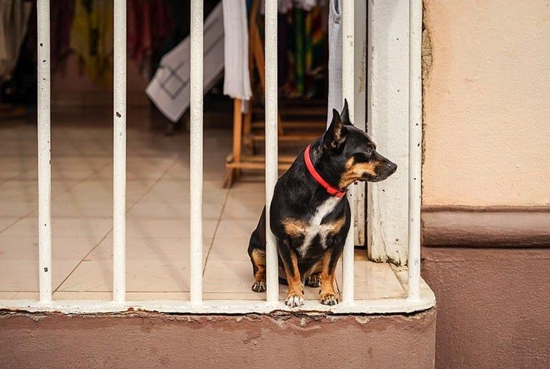 Dlaczego pojawia się nuda u psa?