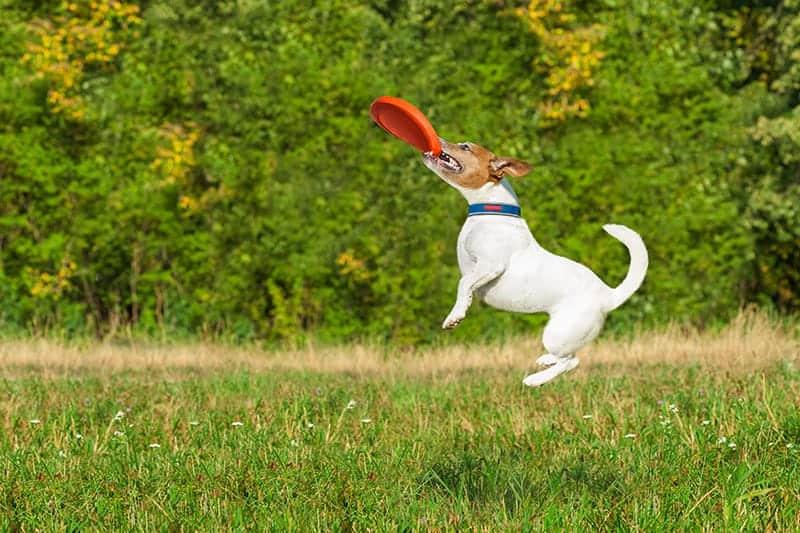 Jak zapobiegać nudzie u psa?