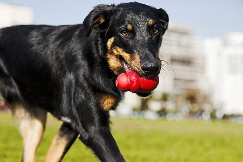 Zabawy i zabawki dla psów