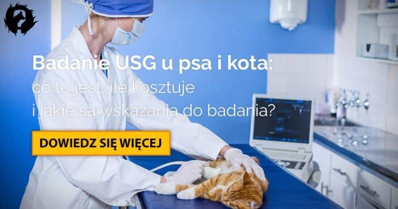 USG u psa i kota: kiedy wykonać i ile kosztuje badanie ultrasonograficzne?