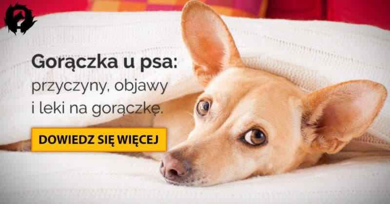 Gorączka u psa: co KAŻDY opiekun psa powinien o niej wiedzieć?