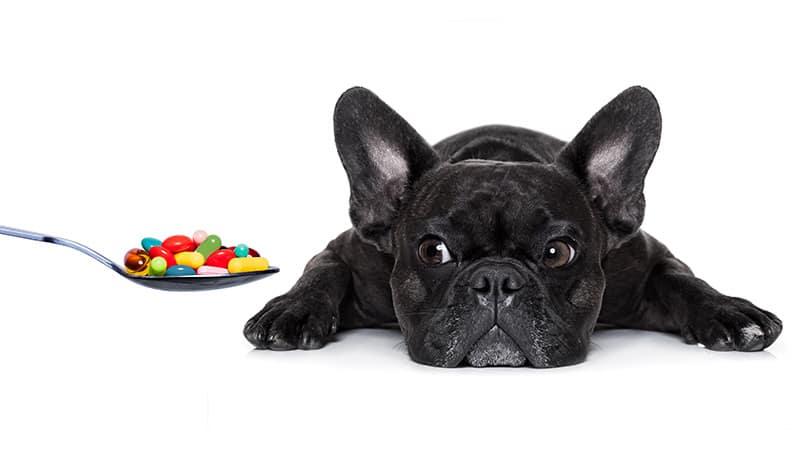Gorączka u psa leki