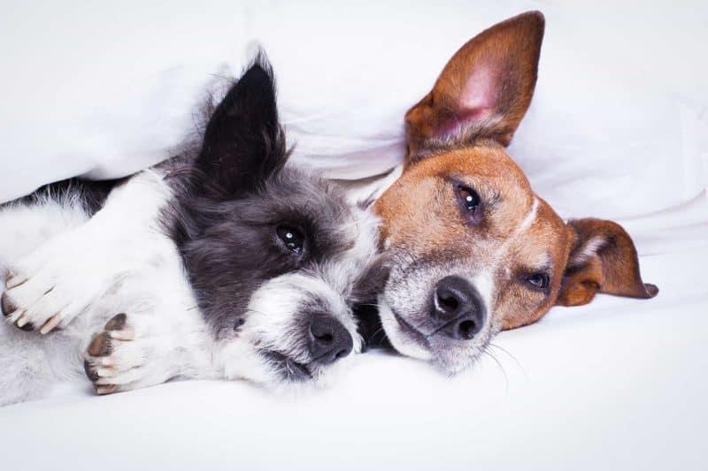 Odporność psa i kota: jak ją wzmocnić [preparaty i suplementy]