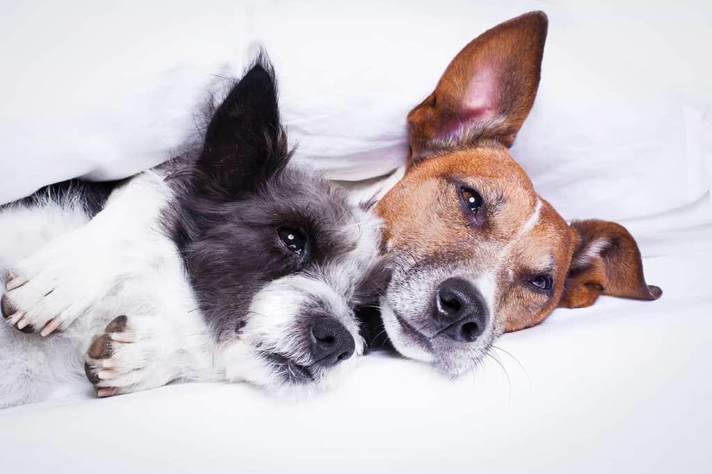 Jak wzmocnić odporność psa?