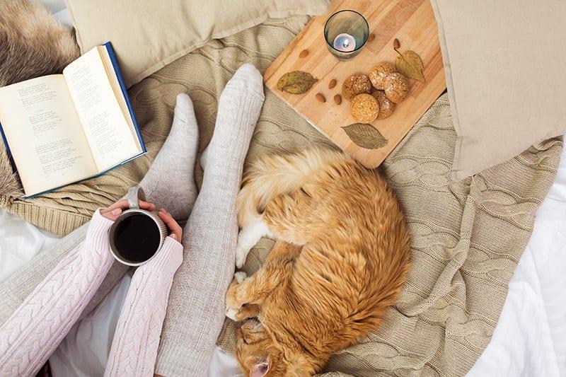 Wzmocnienie odporności kota