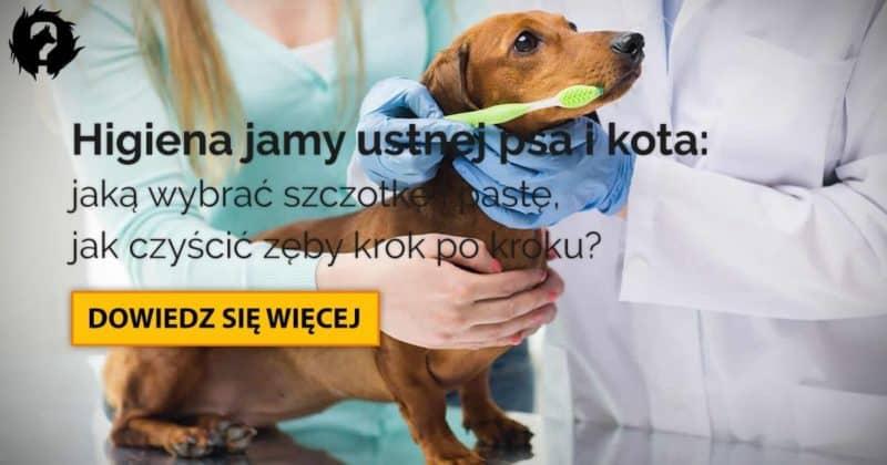 Szczotka, pasta do zębów dla psa/kota: higiena jamy ustnej [krok po kroku]