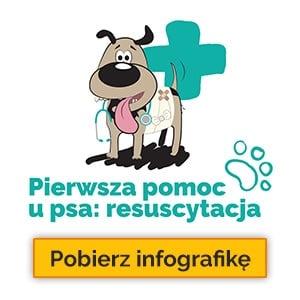 Pierwsza pomoc u psa