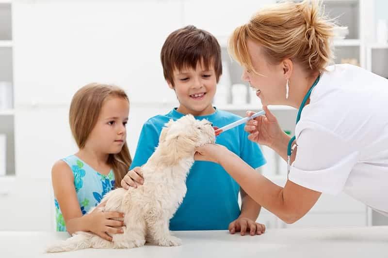 Probiotyki dla psa - rodzaje i ceny