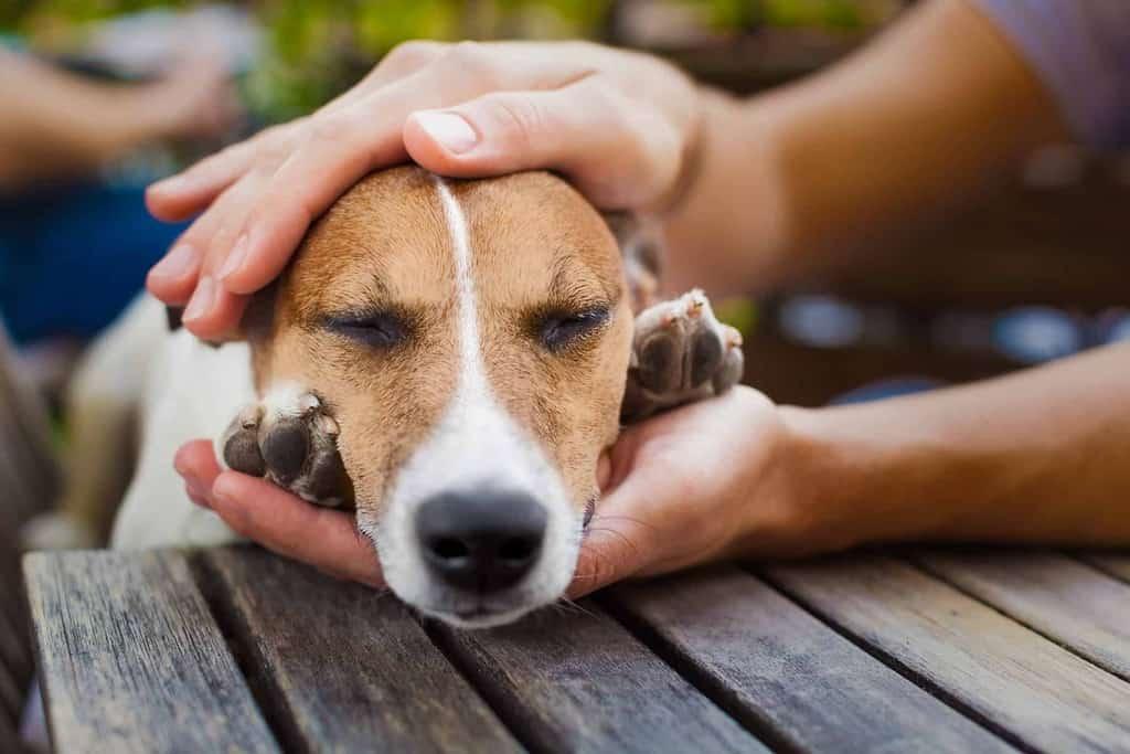 Choroba lokomocyjna u psa