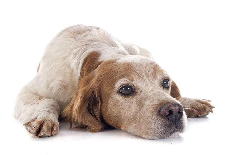 Czkawka u psa objawy