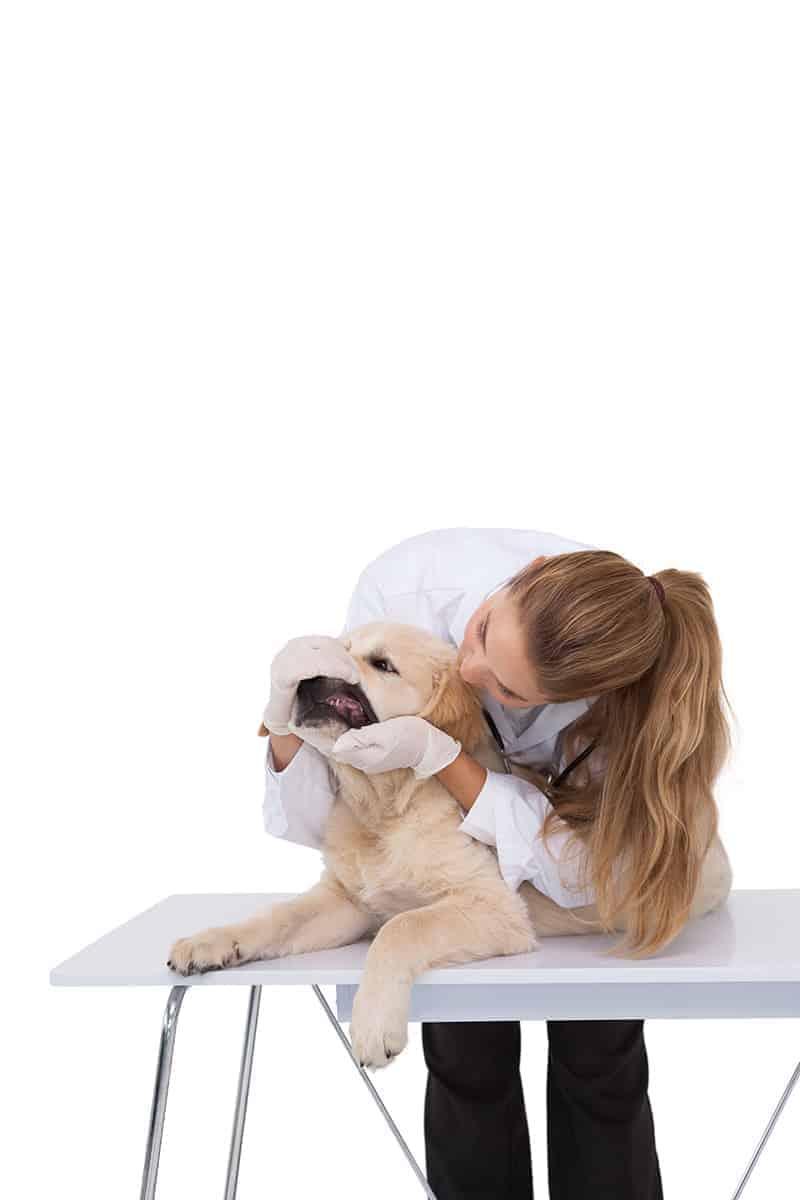 Jak dobrać aparat ortodontyczny dla psa?