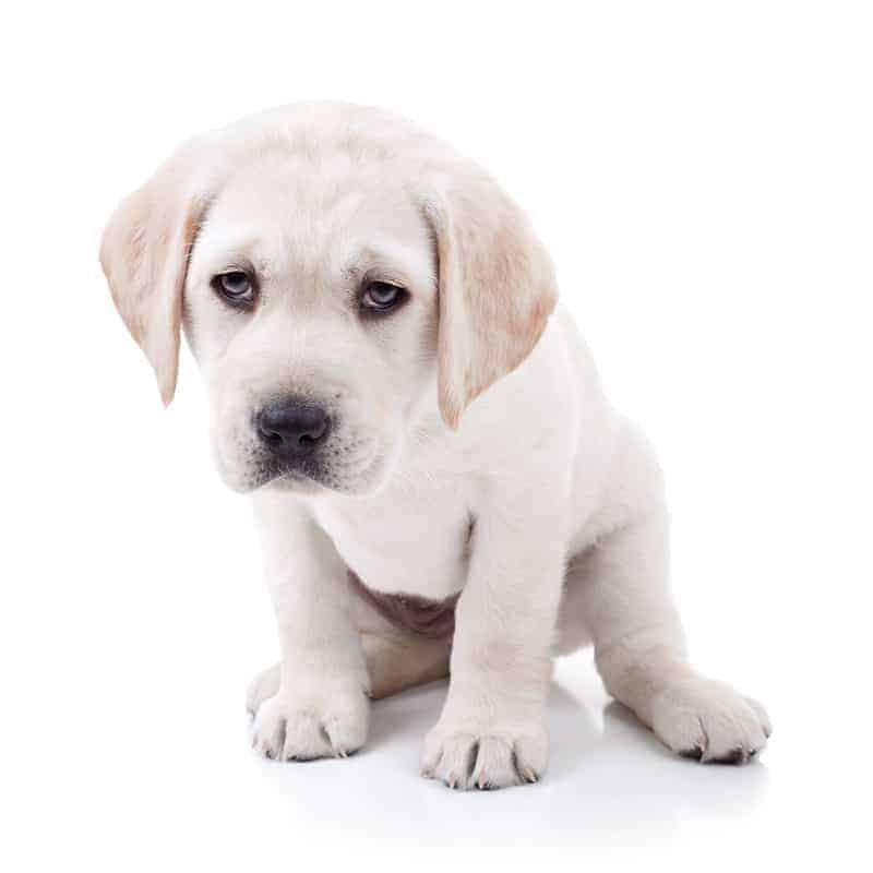 Skąd się bierze katar u psa?