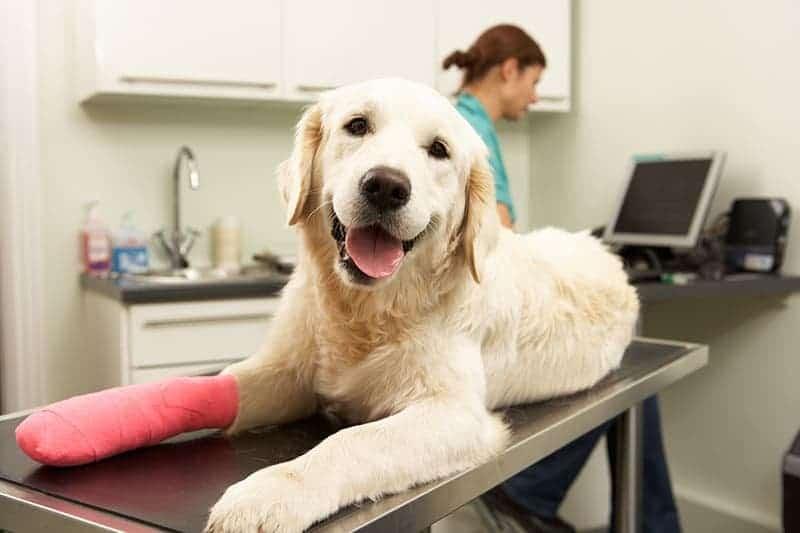 Kulawizna u psa objawy