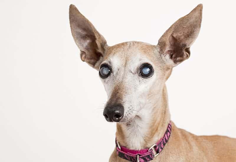 SARDS u psa diagnostyka