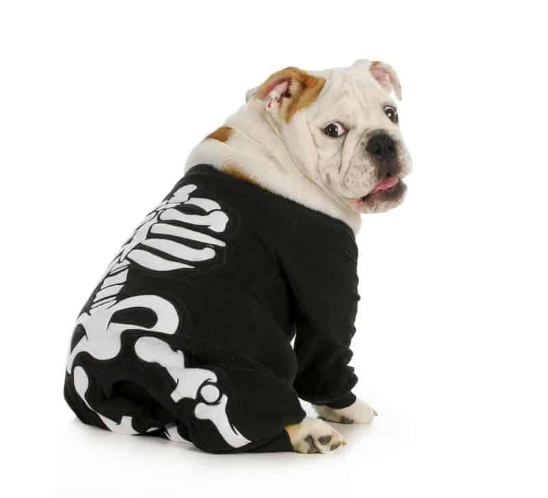 Spondyloza u psa: objawy, diagnostyka, leczenie i rehabilitacja