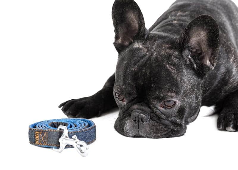 Spondyloza u psa rehabilitacja