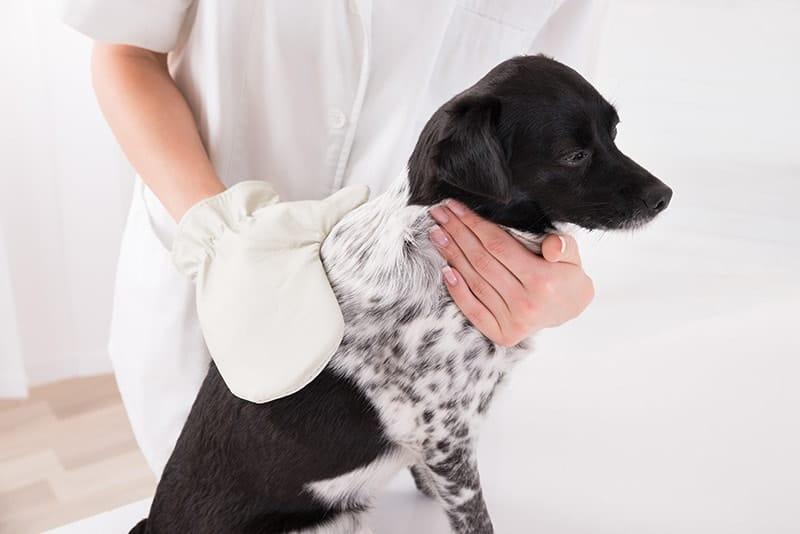 Rękawica do czesania psa
