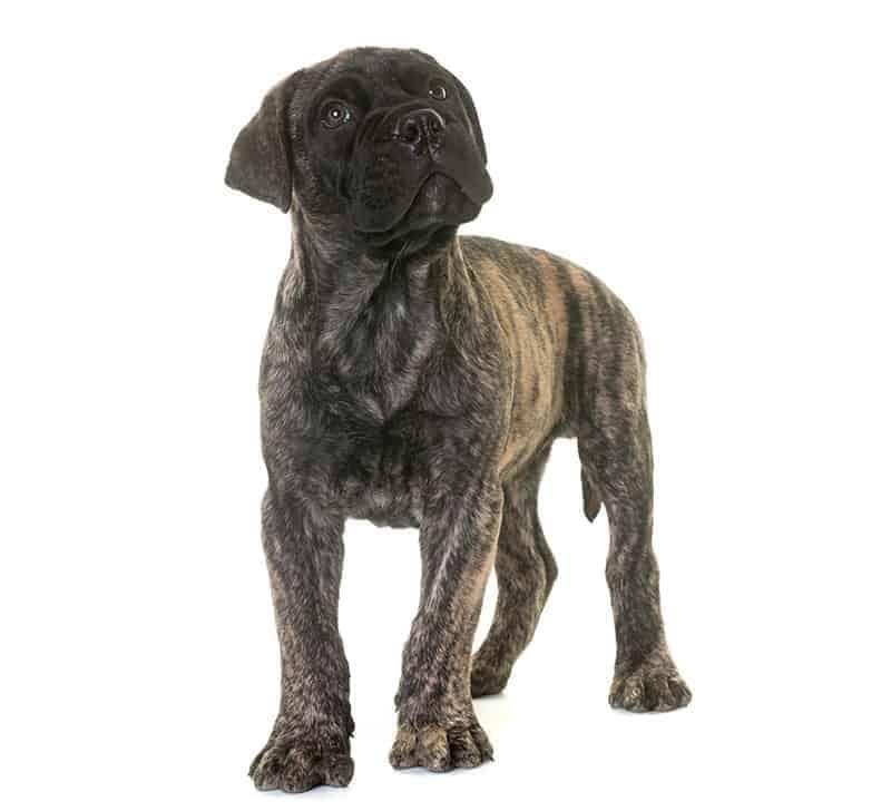 Dla kogo będzie to idealny pies?