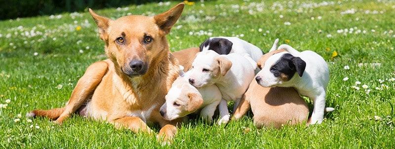 Pies dla dzieci