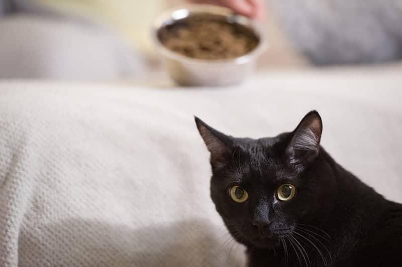 Jak dieta wpływa na zdrowie kota?