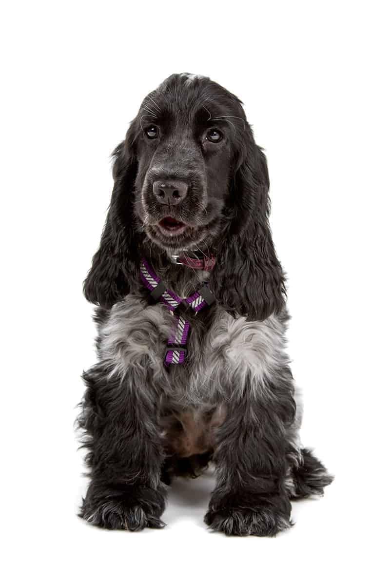 Jakie szelki dla psa?