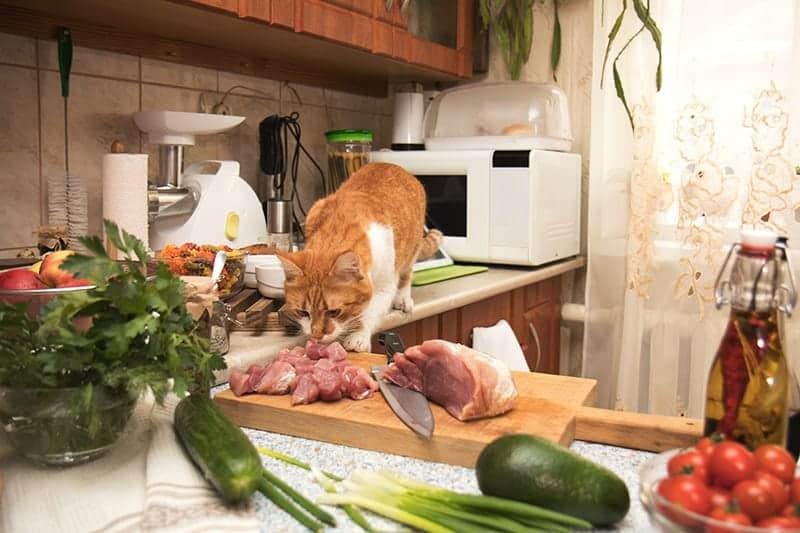 Karmienie kota mięsem