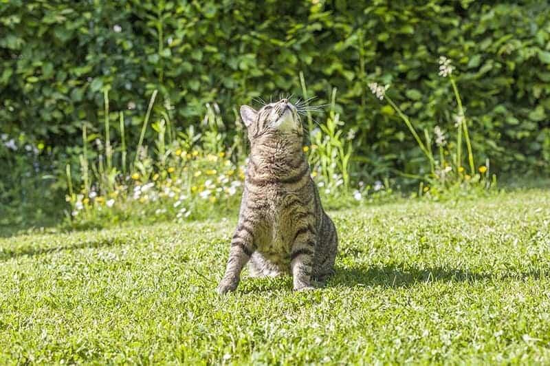 Zapotrzebowanie energetyczne kota