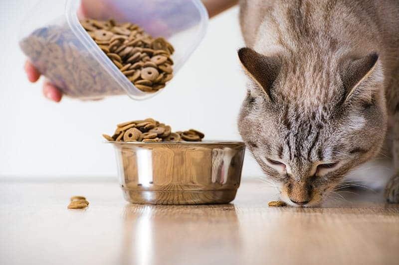 Karma weterynaryjna dla kota