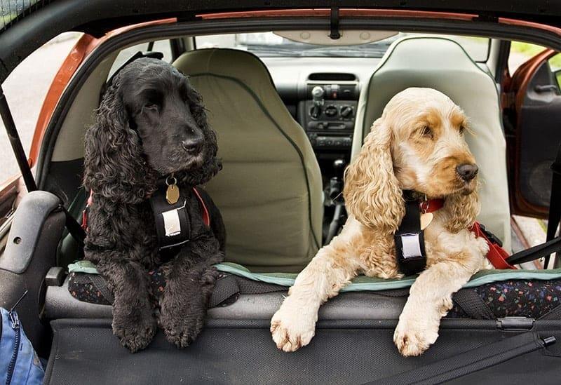 Szelki dla psa do samochodu