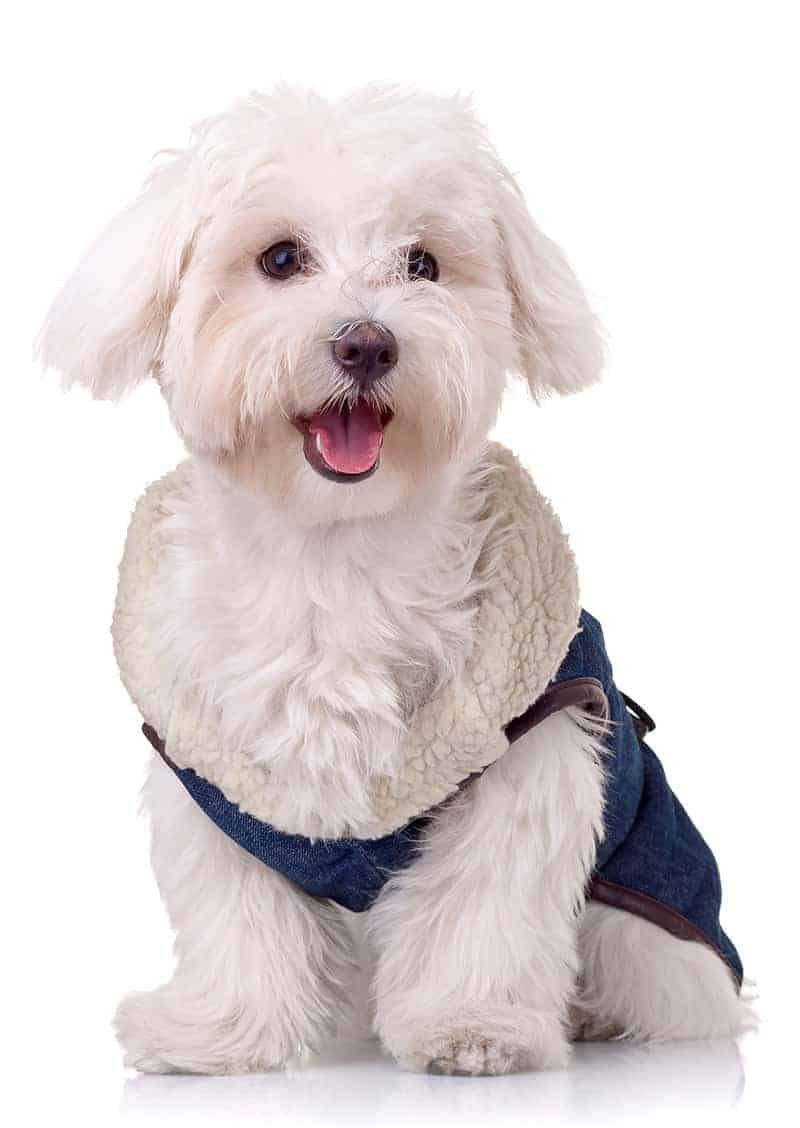 Rodzaje psiej garderoby
