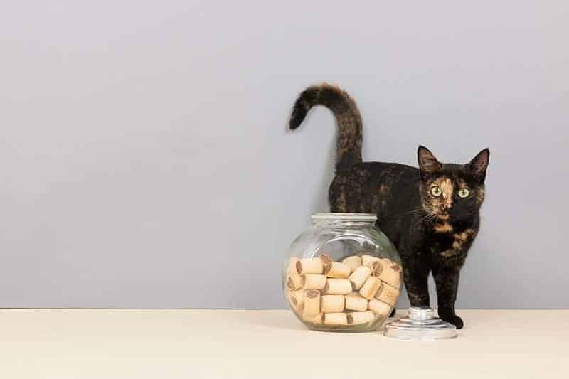 Czym nagradzać zwierzęta o specjalnych potrzebach?