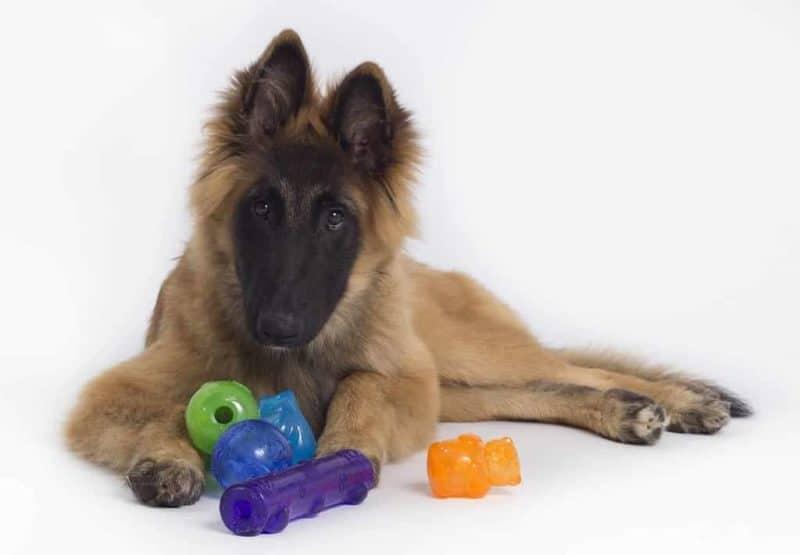 Zabawki dla psa: jakie zabawki są najlepsze i dlaczego?