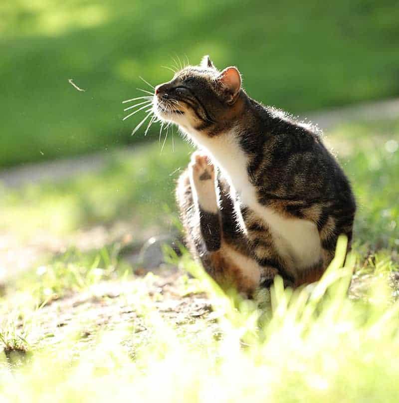 skóra kota