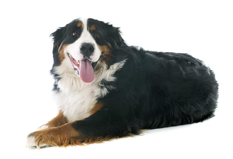 Jak określić prawidłową wagę psa/kota?