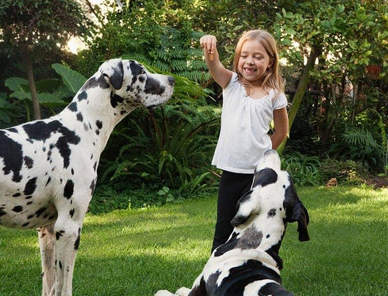 przysmaki dentystyczne dla psa