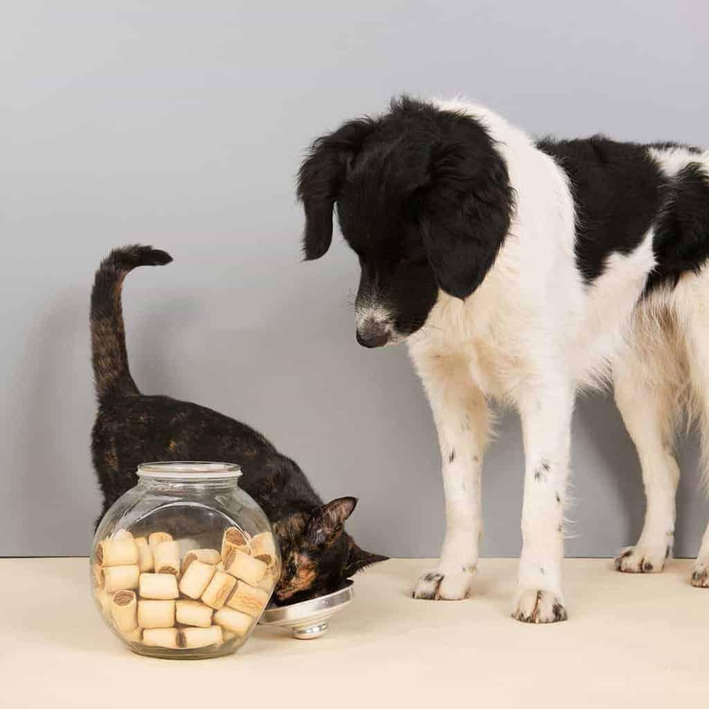 przysmaki dla psa 1200x1200 - Przysmaki dla psa i kota: kiedy je podawać i jakie wybrać [przepisy]