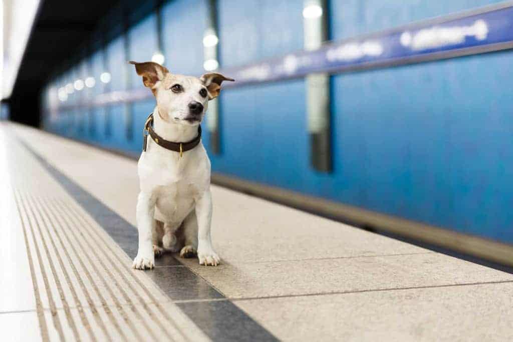 Co robić gdy zaginie pies?