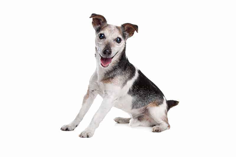 Jak widzą psy?