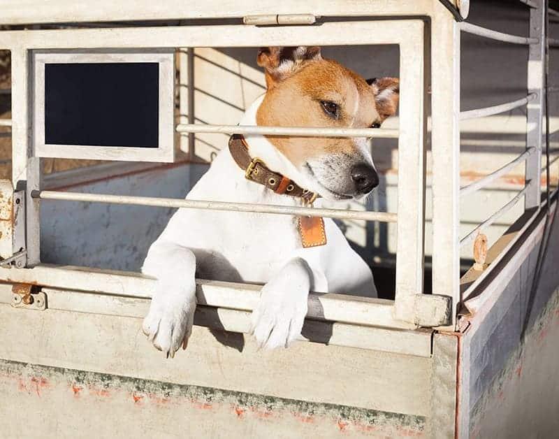 Warto sprawdzić, czy pies nie został odłowiony