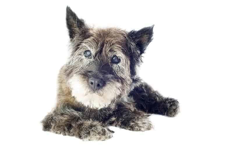 Wiele psów z zaburzeniami widzenia świetnie sobie radzi