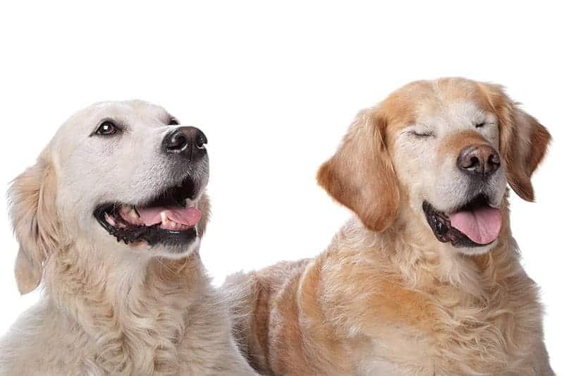 Ślepota – co to oznacza?